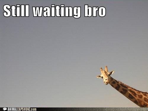 funny-animal-captions-still-waiting-bro